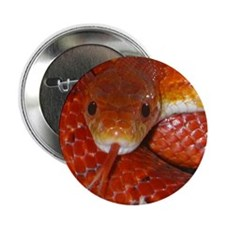 "Corn Snake 2.25"" Button (10 pack)"