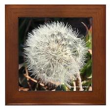 Dandelion Puffball Framed Tile