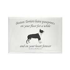 Boston Terrier Pawprints Rectangle Magnet (10 pack