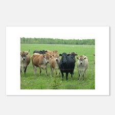 Curious Cows Postcards (Package of 8)