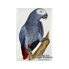 African Gray Parrot Rectangle Magnet