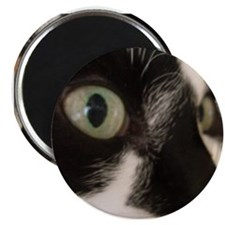 Cat Close Up Magnet