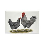 Cuckoo Marans Rectangle Magnet (100 pack)