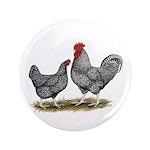 "Cuckoo Marans 3.5"" Button (100 pack)"