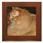 Orange Tabby Cat Framed Tile