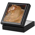 Orange Tabby Cat Keepsake Box