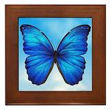 Blue butterfly Framed Tiles