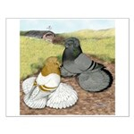Trumpeter Pigeon Pair Small Poster