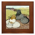 Trumpeter Pigeon Pair Framed Tile
