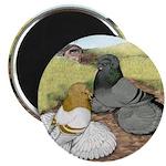"""Trumpeter Pigeon Pair 2.25"""" Magnet (10 pack)"""