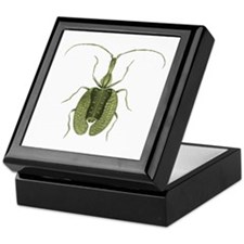 Violin Beetle Keepsake Box