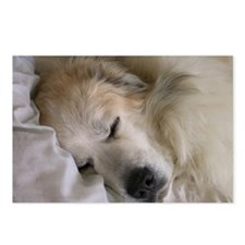Cute Pyr Postcards (Package of 8)