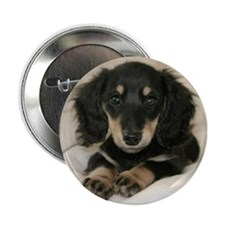 "Long Haired Puppy 2.25"" Button"