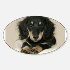 Long Haired Puppy Oval Decal