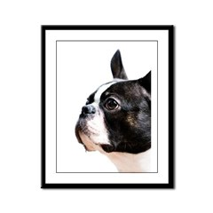 Boston Terrier Framed Panel Print