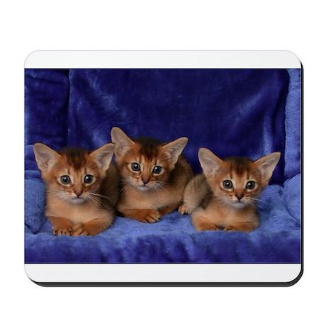 Abyssinian kittens Mousepad