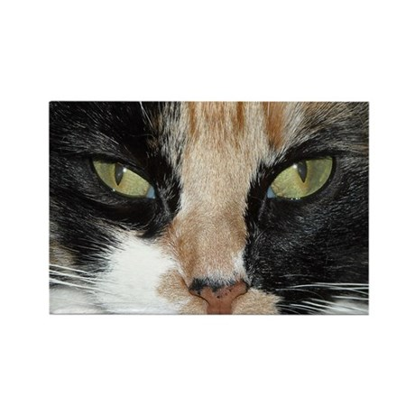 Calico Tiger Girls's Closeups Rectangle Magnet (10