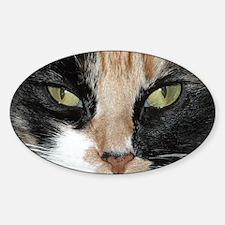 Calico Tiger Girls's Closeups Oval Decal