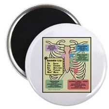 "Remember Cardiac Landmarks 2.25"" Magnet (100 pack)"