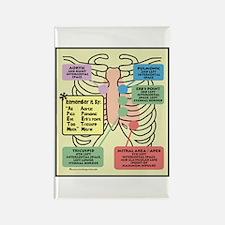 Remember Cardiac Landmarks Rectangle Magnet