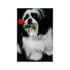 Shih Tzu Dog Rose Rectangle Magnet