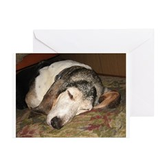 Fred Naps Greeting Cards (Pk of 20)