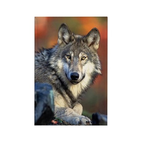 Wolf Photograph Rectangle Magnet