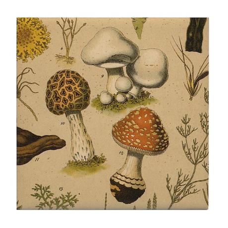 Antique Botanical--Mushrooms Tile Coaster