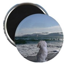 "A Maltese Dog store 2.25"" Magnet (10 pack)"