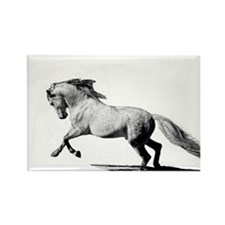 Equestrian animals Rectangle Magnet
