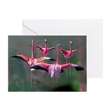 Flamingos on Greeting Card