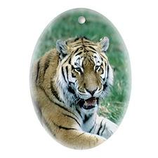"""""""Resting Tiger - B1"""" Oval Ornament"""
