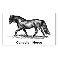 Canadian Horse Rectangle Decal