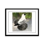 Swallow Pigeon In Field Framed Panel Print