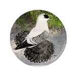 "Swallow Pigeon In Field 3.5"" Button (100 pack"