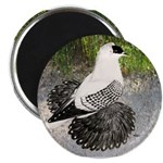 "Swallow Pigeon In Field 2.25"" Magnet (100 pac"