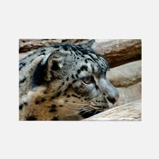 Wild Cat Photograph Rectangle Magnet