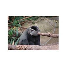 Zoo Monkey Rectangle Magnet