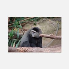 Zoo Monkey Rectangle Magnet