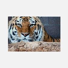 Tiger Photograph Rectangle Magnet