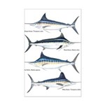 4 Marlin Mini Poster Print