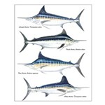 4 Marlin Small Poster