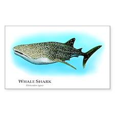 Whale Shark Rectangle Decal