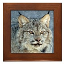 Canada Lynx Framed Tile