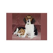Beagles Rectangle Magnet