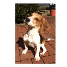 Sit Beagle Postcards (Package of 8)