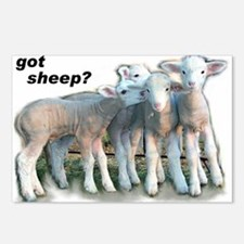 Got Sheep Postcards (Package of 8)