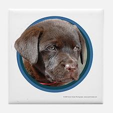 Chocolate Lab Puppy Tile Coaster