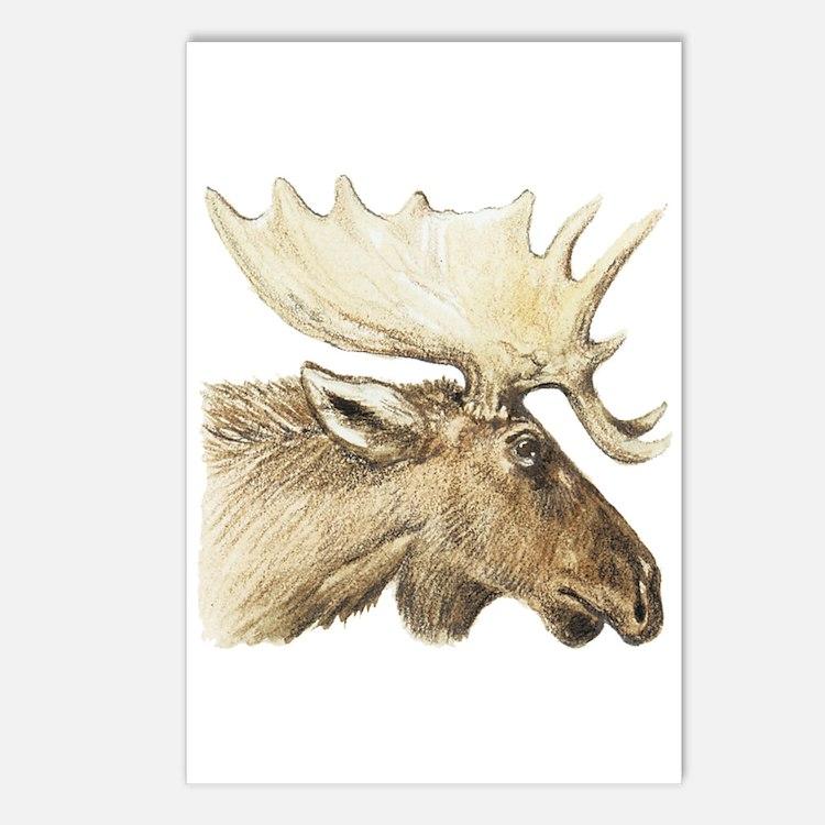 moose drawing Postcards (Package of 8)