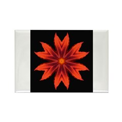 Orange Lily II Rectangle Magnet